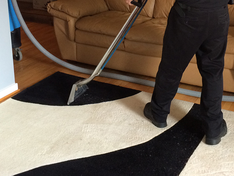 Hand Brush Rug Cleaning Treatment Professional Rug Cleaners